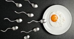 spermatozoidi jure ka jajetu