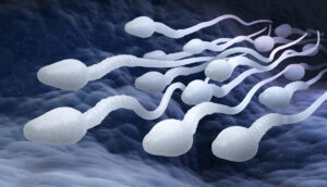 spermići